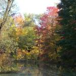 """Autumn in Michigan:  Pond"" by vjheckel"