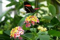 Butterfly on pink and yellow flowers