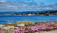pacific grove