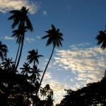 """Tall palm trees at sunset"" by lisa_w"