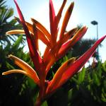 """Birds of paradise flower 2"" by lisa_w"