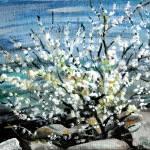 """""""Blossom 2"""" by splynch"""