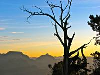 Grand Canyon Sunrise Tree