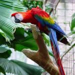 """""""Parrot"""" by Alexphoto"""