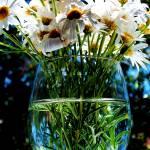"""""""Glass half full"""" by Kismet"""