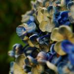 """""""Wild bouquet"""" by Kismet"""
