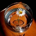 """Drink of Daisy"" by Kismet"