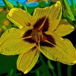 """YELLOW ASIATIC LILY"" by ROBERTSCOTTPHOTOGRAPHYY"