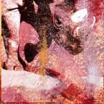 """Rhino Pink"" by edbock"