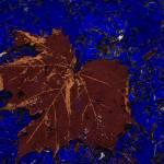 """""""leaf"""" by mzzdori"""
