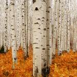 """Aspen Panoramic"" by ccsg51"