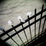 """""""Bones"""" by jomachadophotography"""
