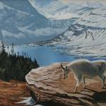 """Mountain Goat - Glacier National Park"" by Dullinger"
