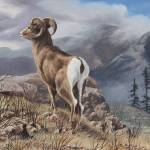 """Rocky Mountain Bighorn Sheep"" by Dullinger"
