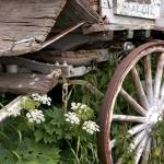 """Wagon Wheel Flowers"" by KatRosePhotography"