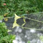 """secret garden"" by TripLPhotography"