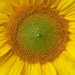 """Center of the Sun, Dee Oberle"" by GypsyChicksPhotography"