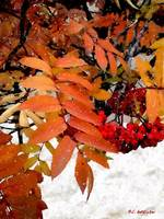 Snow on Scarlet Magick