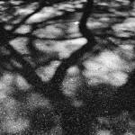 """Tree shadow in black and white"" by kenlawrence"