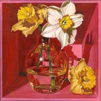 Narcissus in Pink