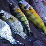 """""""Fresh Fish"""" by maryfrances2374"""