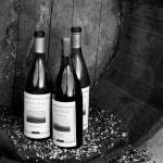 """Black and White_WineCountry_05"" by SBCountyImages"