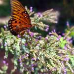 """Butterfly 1 Orange"" by Ricardos"