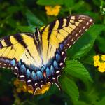 """Butterfly 8 Yellow"" by Ricardos"