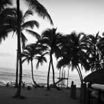 """Black and white tropical morning"" by mikeprangley"