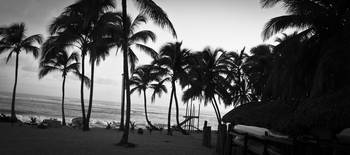 Black and white tropical morning