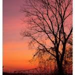 """Tree at sunset"" by TamIshArt"