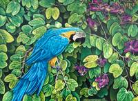 Blue-Gold Macaw Among The Leaves
