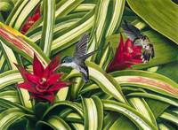 Hummingbirds and Bromiliad