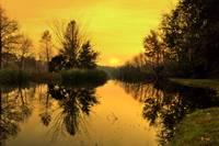 Golden Stillness