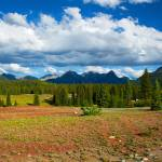 """Highway 550 near Molas Lake"" by andrewking"