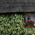 """Irish Cottage in Red and Green"" by michaelcarlucci"