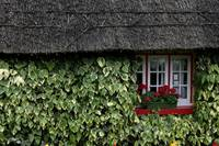 Irish Cottage in Red and Green