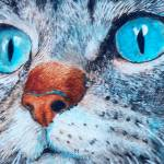 """Sally the Blue Eyed Cat"" by mozache"