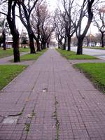 Sidewalk with Trees
