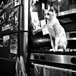 """060 - Cat in a very messy kitchen"" by moravec"