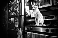 060 - Cat in a very messy kitchen
