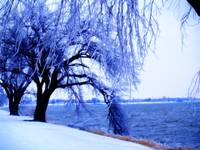 Winter Beauty 1