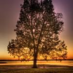 """""""Tree in Park"""" by MikePabst"""