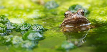 Frog Reflections
