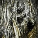 """Cypress Tree Bark"" by MichaelOh"