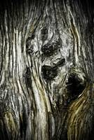 Cypress Tree Bark