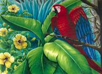 Scarlet Macaw's Delight