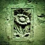 """""""Concrete petals #1"""" by MichaelOh"""