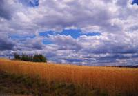 Clouds And Wheat
