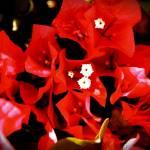 """""""deep red"""" by kelleyhermanwager"""